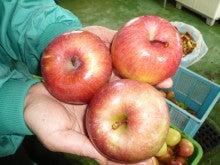オーベルジュスタッフの高原便り-りんご