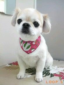 LOOP'S☆十犬十色-2011011614110000.jpg