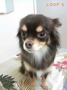 LOOP'S☆十犬十色-2011011511210001.jpg
