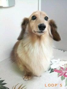 LOOP'S☆十犬十色-2011011518310002.jpg