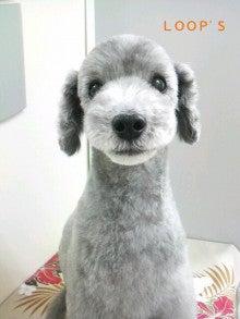 LOOP'S☆十犬十色-2011011513460000.jpg