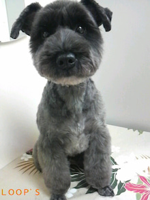 LOOP'S☆十犬十色-2011011619040000.jpg