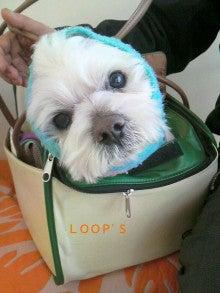 LOOP'S☆十犬十色-2011011611140002.jpg