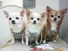 LOOP'S☆十犬十色-2011011016580004.jpg