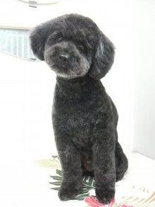LOOP'S☆十犬十色-2011011019450000.jpg