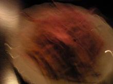 ひろぷろぐ,婚礼,司会,マナー研修,ブライダルプロデュース,人材育成-2011012423030000.jpg