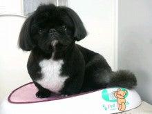 LOOP'S☆十犬十色-2011011815590003.jpg