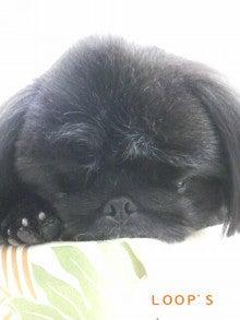 LOOP'S☆十犬十色-2011011816090002.jpg