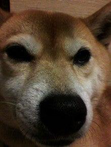 ☆蘭ラン日記☆ -2010121916140001.jpg