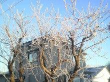 ある教会の牧師室-樹氷1