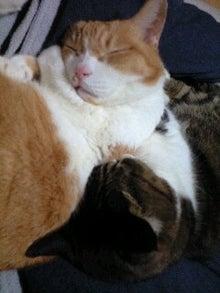 ずれずれブログ…湘南で猫と暮らせば…-110129_2212~0001.jpg