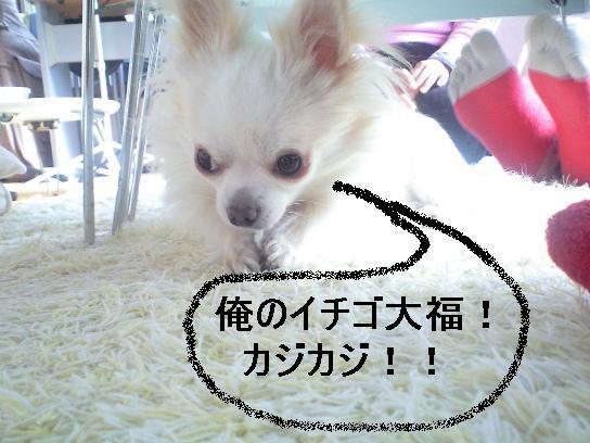 * * *  Nature artist Haruyo Takayama   * * *  -Arigatou- 1st Album「Sanctuary」Now音Sale!Pure Voice,Pure Mind,Pure...-俺のイチゴ大福!