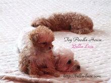 トイプーハウス Bella Luce Blog