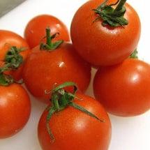 トマトのファルス