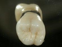 みんなの知らない歯医者さん