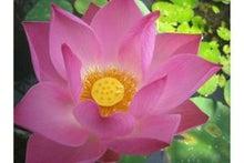 lotusマミーのブログ-lotus