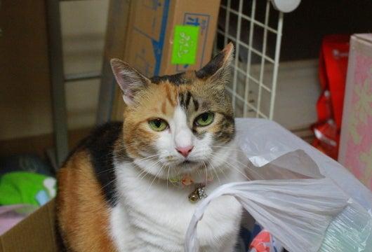 Cat Life~おてんば娘の毎日~