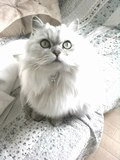 マイティハウジングのブログ-momoko・りりのブログ