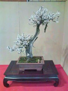 ~ ゆるり木 ~-20110205152712.jpg