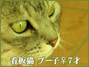 新潟県柏崎市エクステリア&ガーデニング情報 クリエ-プー子