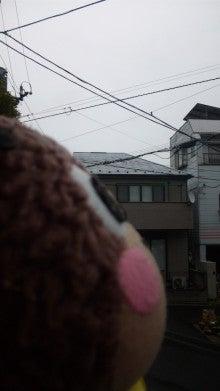 ぽけくまブログ-おひさしぶりぶり~!2