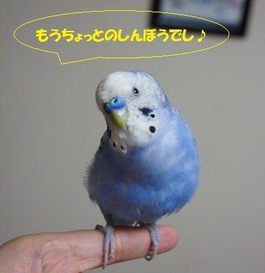 れをBASSMENT ~銀河の彼方からコンニチワ!~