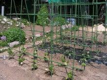 家庭菜園の野菜作り、上達のコツと菜園ライフの楽しみ方-支柱