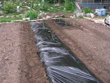 家庭菜園の野菜作り、上達のコツと菜園ライフの楽しみ方-マルチ