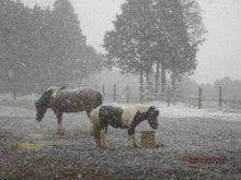 馬を愛する男のブログ Ebosikogen Hose Park -雪の中での馬たち