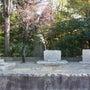 斉藤茂吉の墓ーー歌人…