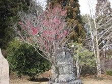 センダイのブログ-朝倉文夫記念公園