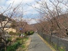 $四季倶楽部旅 produce ☆ お得なツアー情報ブログ-河津桜の様子