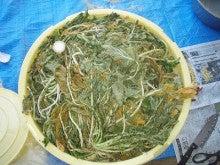 キリガヤfarmのブログ