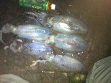 アオリイカ釣果-のっぽのブログ
