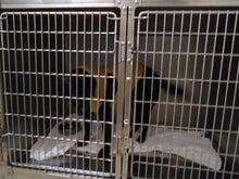 大橋動物病院のブログ-2