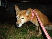 大橋動物病院のブログ-4