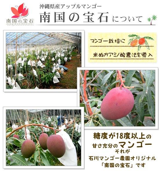 石川マンゴー農園-沖縄県産マンゴー
