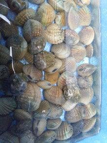 沖縄 潮干狩り 真冬なのに【沖縄の潮干狩り】昨年の雪辱を果たす大漁「字泡瀬」