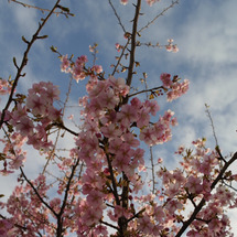 春近しですな。