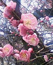 しわ・シミ・ニキビをなくすスキンケアで自信を持とう♪-梅の花。キレイ。