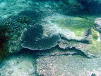 バリ島 くらげのjalan-jalan-サンゴ