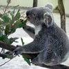 埼玉県こども動物自然公園の画像