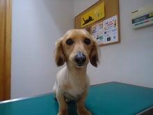 大橋動物病院のブログ-6