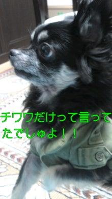 法律事務所のパラリーガル 行政書士(所沢市)のブログ-110227_2131~020001.jpg