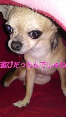 法律事務所のパラリーガル 行政書士(所沢市)のブログ-110227_2129~010001.jpg