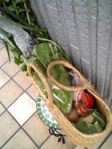 kokoroのブログ-お野菜一杯買い物籠