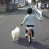 一輪車との並走の画像