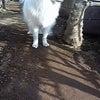ちゃらんぽらん番犬の画像