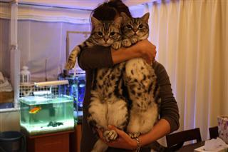 「ぼくたちネコだけど。」