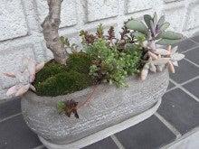 植物屋ジャルのブログ